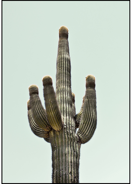 Saguaro ALU, interartdesign.no